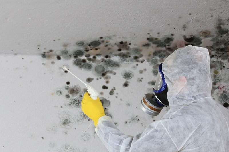 Mold Damage cleanup, Mold Removal